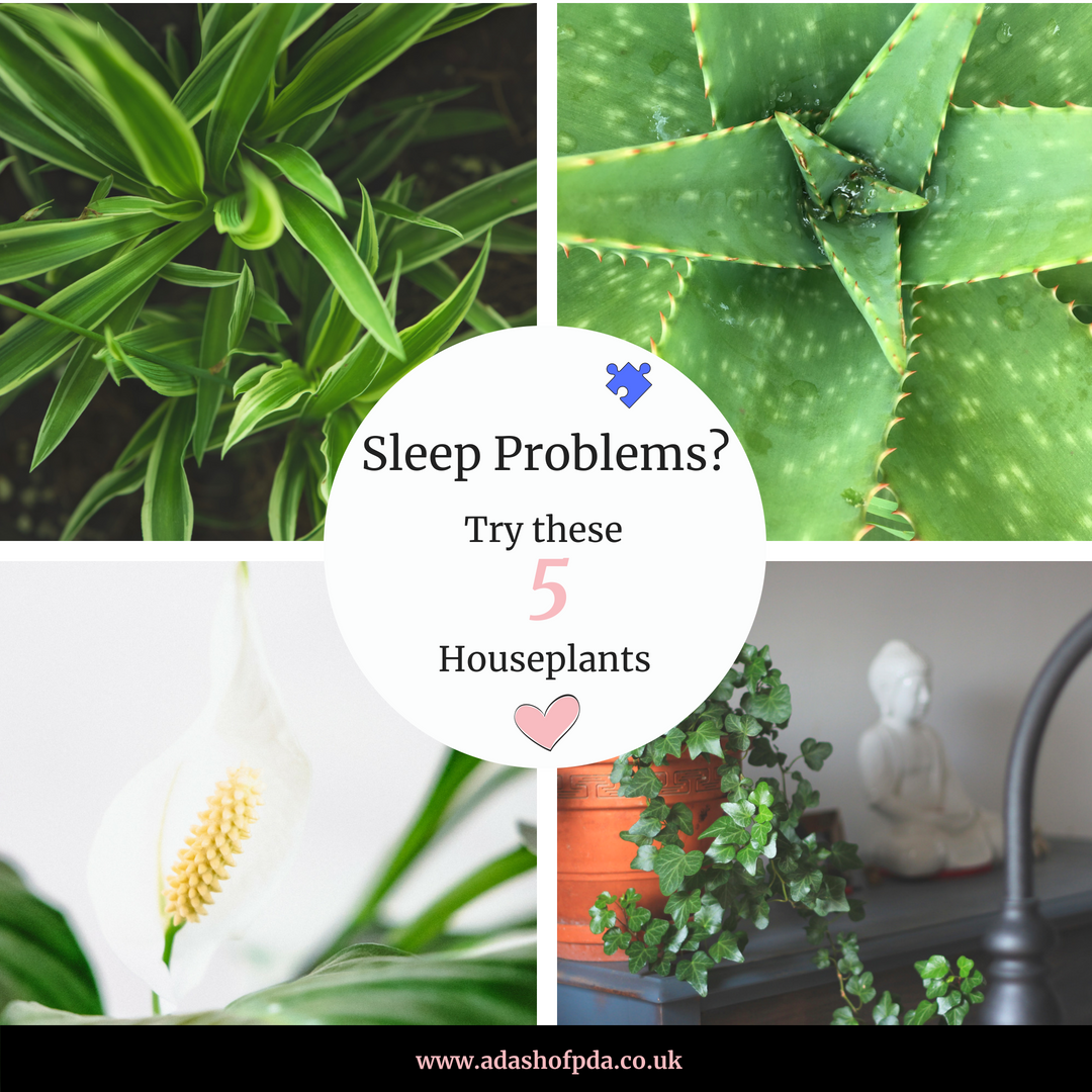 5 House Plants that can Naturally Improve Sleep
